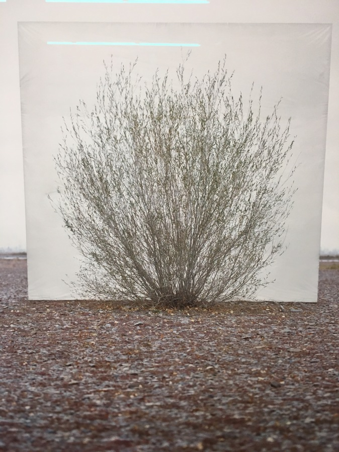Tree…